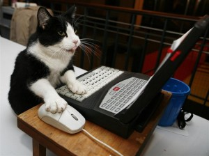clever-cat-using-pc